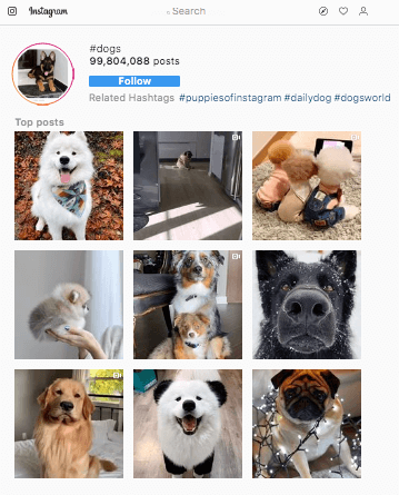 15 Best Instagram Hashtags for Dogs